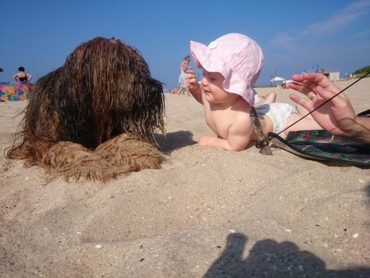 best-friends love-baby with dog-kiss-briard