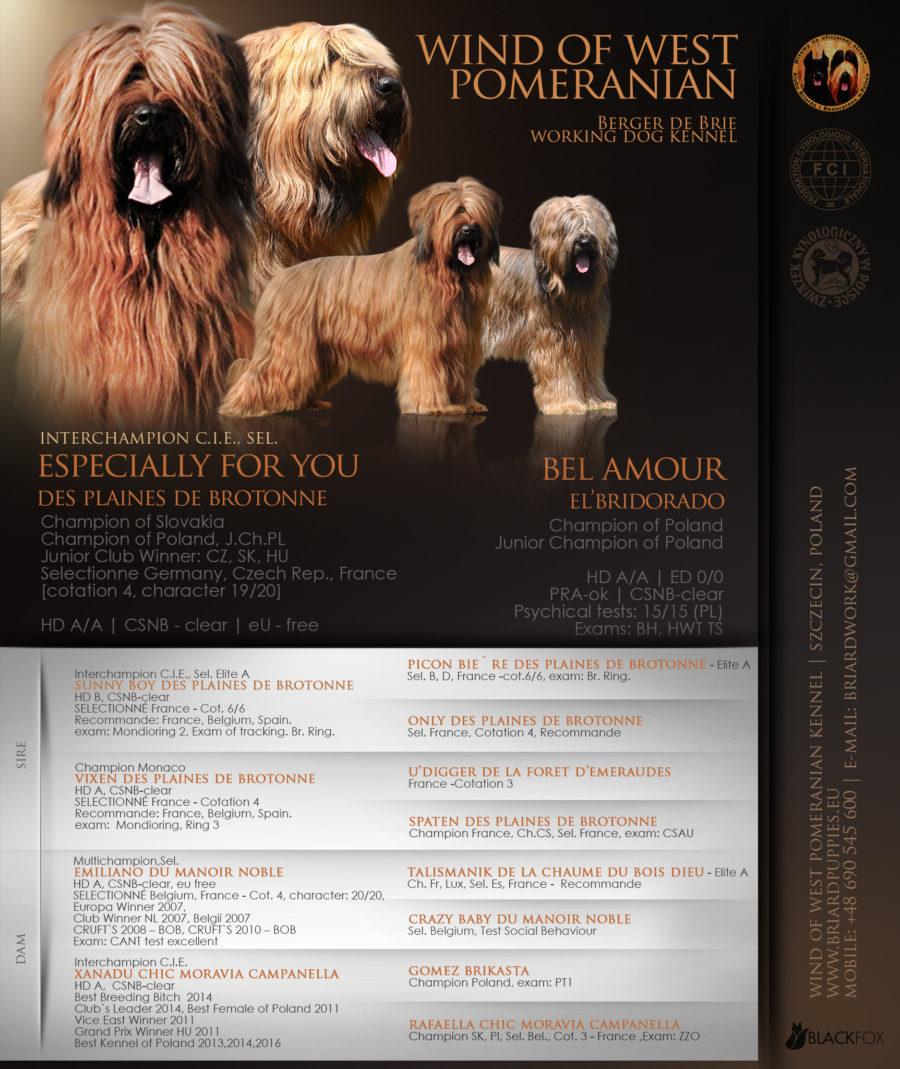 Szczeniaki-mioty berger de brie-briard zapowiedź miotu (briard puppies-welpen)