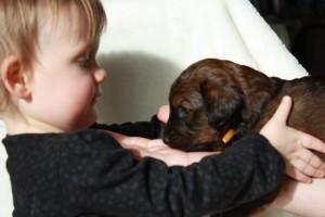 Szczeniaki-Mioty briard szczeniak  wrączki dziecka